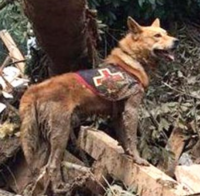 災害救助犬2.PNG
