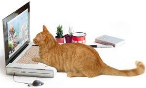 cat pc 1.jpg