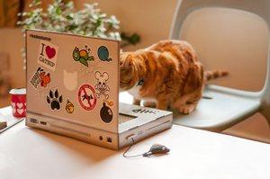 cat pc 2.jpg