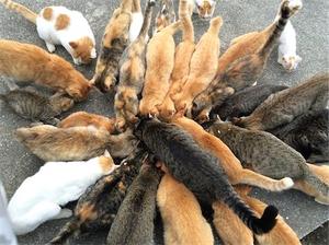cat 4.jpg