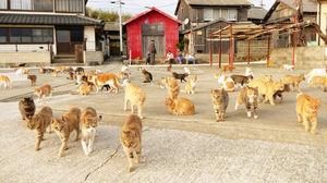 cat 6.jpg