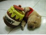 ハロウィン 犬.PNG