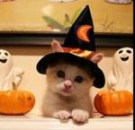 ハロウィン 猫.PNG