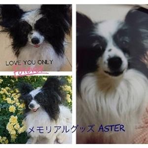 masuyoshi.jpg