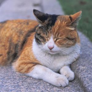 cat0002-003.jpg